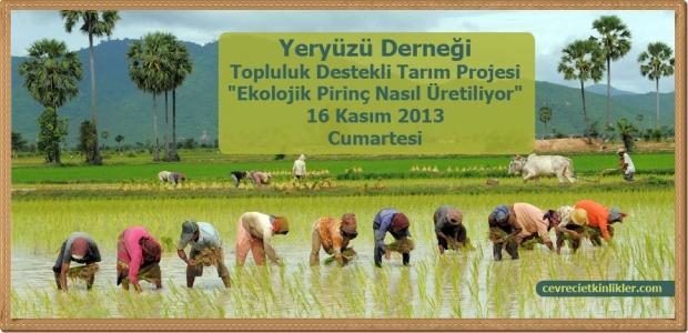 Ekolojik Pirinç Nasıl Üretiliyor?
